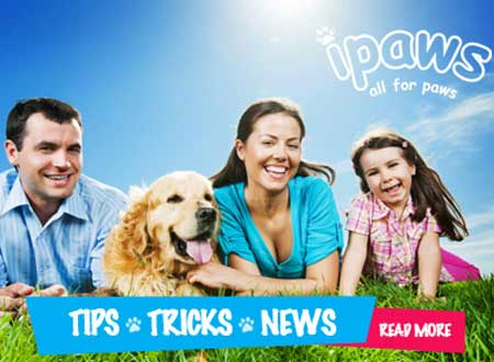 Dog Products Northern Suburbs Sydney, Eastwood, Macquarie Park, Ryde, Epping