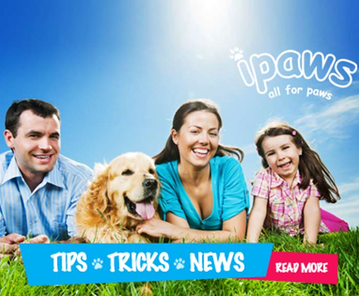 Dog and Puppy Product Supplies Online Melbourne, Brunswick, Essendon, Surry Hills, St Kilda, Coogee